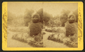 Mr. Hart's garden, Palatka, Florida, from Robert N. Dennis collection of stereoscopic views.png