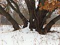 Muromets Winter4.jpg