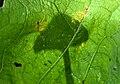 Mushroom Shadow.jpg