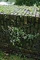 Muurbegroeiing op de Menenpoort te Ieper - 370545 - onroerenderfgoed.jpg