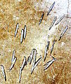 NM prison riot axe marks.jpg