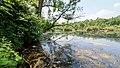NSG Pellini-Weiher FFH-Gebiet Indemündung Uferbereich - Am Weiher II.jpg