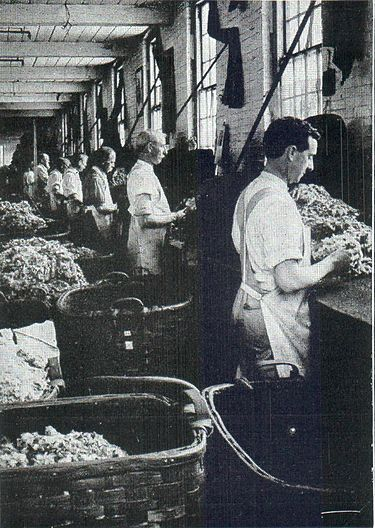 NSRW Story of Wool - sorting raw wool into grades.jpg