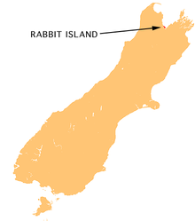 NZ-Rabbit I.png
