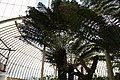 National Botanic Garden,Dublin,Ireland - panoramio (50).jpg