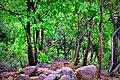 Natural Path.jpg