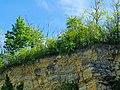 Naturdenkmal Steinbruch am Stadtrand Bruchsal.jpg