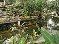 Nature Bird Park KL.jpg
