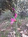 Nature des Monts Beni Chougranes Mohammadia 28.jpg