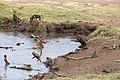 Nature of Ngorongoro Conservation Area (108).jpg
