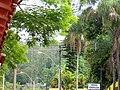Natureza - panoramio - tiowalmes.jpg