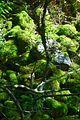 Naturschutzgebiet Neuer Hagen - Urwald (1).jpg