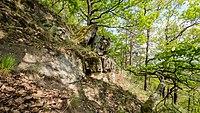 Naturschutzgebiet Schenkenberg WDPA ID 165380 DE-TH Hangmischwald,Felsformation mit Pionierrasen III.jpg