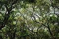Net of Branch.jpg