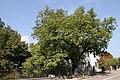 Neumarkt - Nußbaum - ID 059 G03 - 01.jpg
