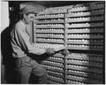 Newberry County, South Carolina. View of interior of one of the incubating compartments. This is a . . . - NARA - 522750.tif