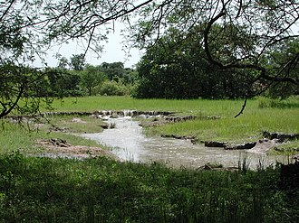 Niangoloko Department - Niangoloko Forest
