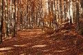Niebieski szlak jesienią - panoramio.jpg
