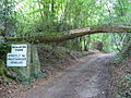 North Downs Lane, Combe Bottom - geograph.org.uk - 460578.jpg