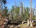 Nyteboda naturreservat mars 2014.jpg