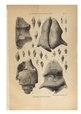 """O'Gorman, Gaëtan (1861-1939 ; comte) et Cossmann, Maurice (1850-1924) """"Le Gisement cuisien de Gan (Basses-Pyrénées),"""".pdf"""