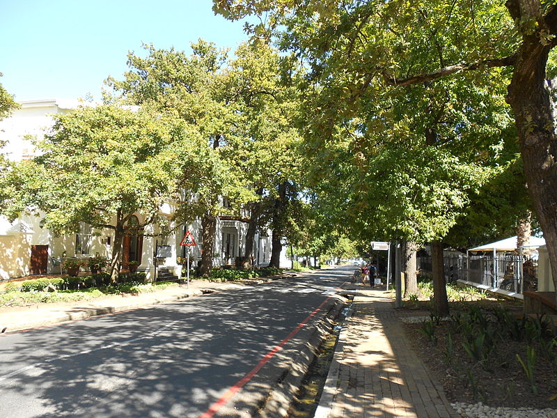 Trees planted near the street can reduce stormwater runoff - Image courtesy of https://upload.wikimedia.org/wikipedia/commons/thumb/0/02/Oak_Trees_Dorp_Street_Stellenbosch.JPG/800px-Oak_Trees_Dorp_Street_Stellenbosch.JPG