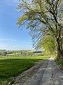 Obschwarzbach Landschaft.jpg