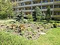 Ogród kwiatowy na osiedlu Bohaterów II Wojny Światowej w Poznaniu - maj 2021.jpg