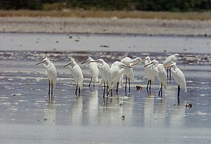 Dok-do - The islands are important as a breeding site for vulnerable Chinese egrets