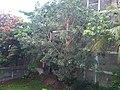 Open plote - panoramio.jpg
