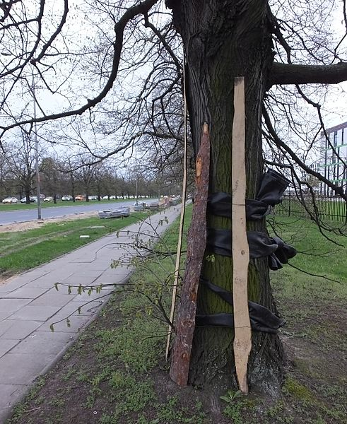 File:Osłona drzewa budowa drogi.jpg