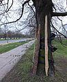 Osłona drzewa budowa drogi.jpg