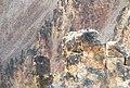 Osprey nest (Yellowstone).jpg