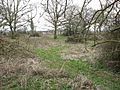 Overgrown WWII camp at Scole, Norfolk, England - geograph.org.uk - 1769886.jpg