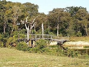Pantanal - Typical dry-land vegetation