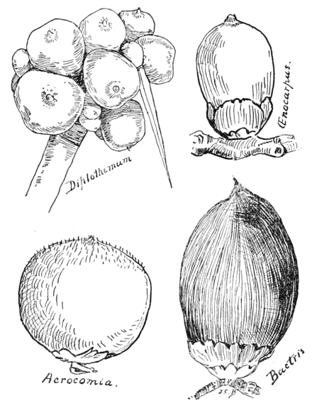 PSM V60 D408 Examples of palm nuts.png