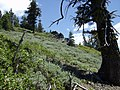 Pacific Crest Trail - panoramio.jpg