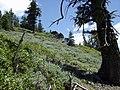 Pacific Crest Trail - panoramio.jpg