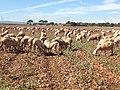 Panoramica Dehesa de Los Llanos 4.JPG