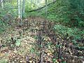 Paparzu grava, rudenī- 57.223583, 24.908917 - mikroskops - Panoramio.jpg