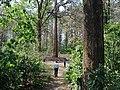 Parambikulam Tiger Reserve - panoramio (11).jpg