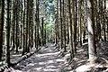 Parc naturel des deux ourthes05.jpg