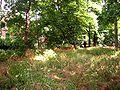 Park Dranske-Lancken - Park 2.jpg