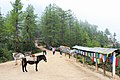 Paro Taktsang trail 04.jpg
