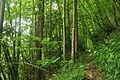 Passage Grove, Tidenham (9647).jpg