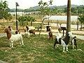 Patung kambing - panoramio - nenek kebayan.jpg