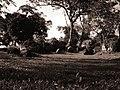 Piedras pintadas de el pueblo de Nancitos.jpg