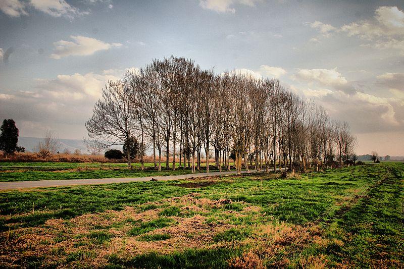 עצים בשלכת