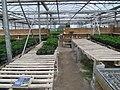 Plant production (6167179875).jpg