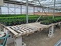 Plant production (6167715110).jpg